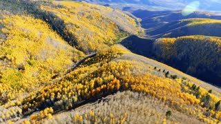 Flying backwards over golden Aspen trees in autumn with fall foliage