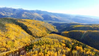 Flying forward over golden Aspen trees in autumn with fall foliage