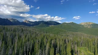 Flying left over pine trees in the Colorado Rocky Mountains