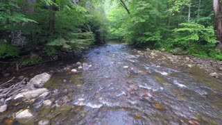Flying over a creek in lush woods