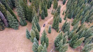 Flying over a Jeep wrangler off-roading through pine forest