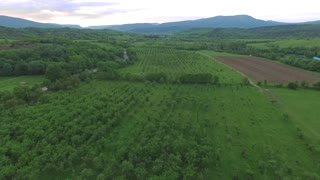Flying over agricultural neat rows of the green trees in the garden