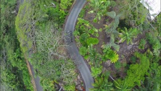 Flying Over Car Along Driveway in Tropical Setting