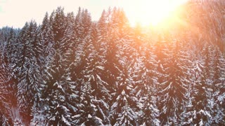 flying over forest. snow winter landscape. trees woods. sunset sky dusk