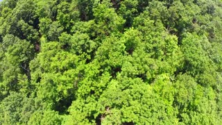 Flying over lush green treetops