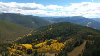 Flying over pine trees and fall foliage aspens in Colorado Rocky Mountains