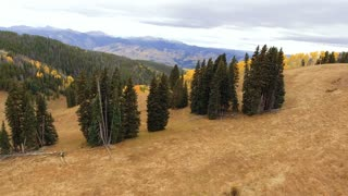 Flying over pines and into an Aspen forest in autumn