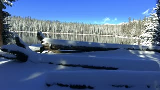 Flying over snow covered logs and pine trees across Lost Lake in Colorado Rocky Mountains in winter