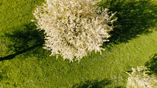 flying over spring trees. springtime plants nature background. summertime