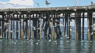 Flying Seagulls and Pier Pan Left in Slow Motion
