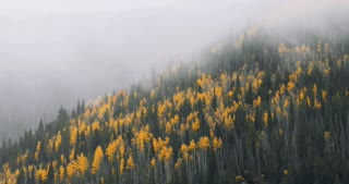 Fog and mist billows over fall foliage forest in Colorado autumn