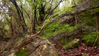 Foilage, Boulders and Tree Roots 4