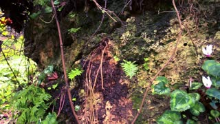 Foilage, Boulders and Tree Roots 6