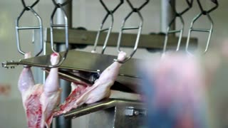 Food industry, chicken meat on conveyor belt