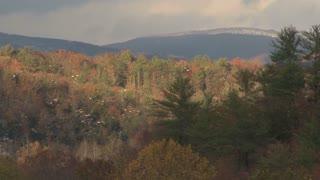 Forest Hillside Landscape