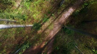 forest trees. woods. trees. plants nature background. summertime. aerial view