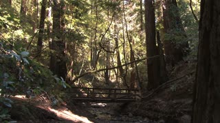 Forest With Wooden Bridge