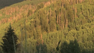 Forested Hill Side At Sunset 3