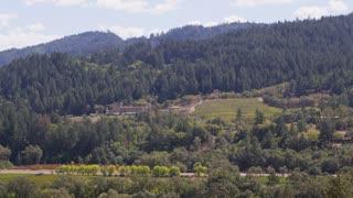 Forests Along Sonoma Hillside