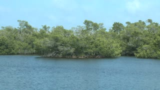 Fort Myers Pond Treeline