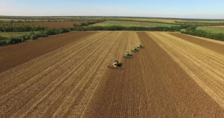 Four combines harvest sunflower