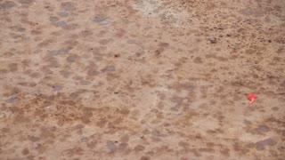 Fresh Spots Of Rain Falling On Dirt