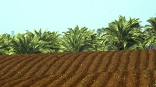 Freshly Furrowed Soil With Palm Trees In Background