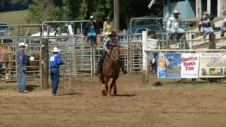 Galloping Horse In Rodeo