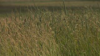 Gettysburg The Wheatfield