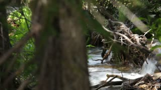 Glide Past Flowing Stream to Dense Forestry