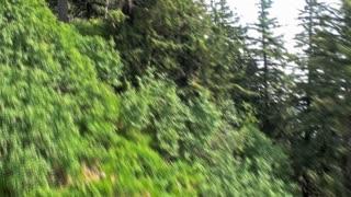 Gliding Treetops Short