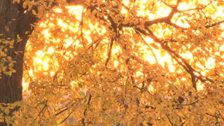 Glowing Leaves 3