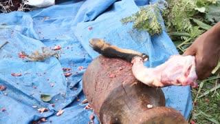 Goat Leg Being Butchered