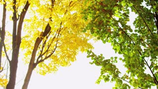 Golden and Green Autumn Trees