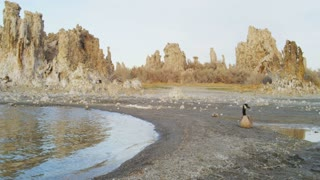 Goose Sitting On Mono Lake Shore