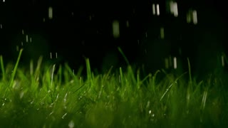 Grass blades and pouring water at night, shallow focus. Super slow motion footage, 500 fps, dark background