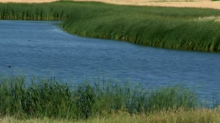 Grass Pond Landscape Timelapse