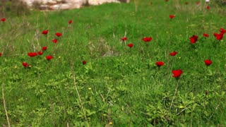 Grass with Red Flowers 2