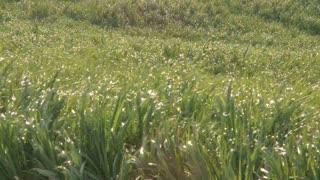 Grassy Field Timelapse