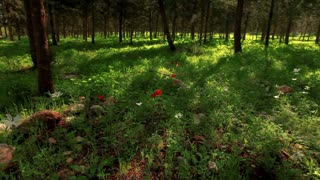 Grassy Field with Flowers and Trees 5