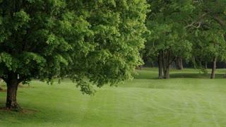 Grassy Greenbrier Field