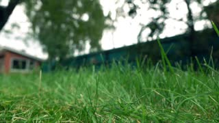 Green grass and man with lawnmower. 4K low angle view, slow motion shot