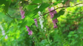 Green Leaves with Purple and White Flowers in Background