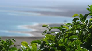 Green Plant With Ocean In Background 2