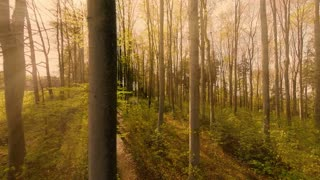 green trees in forest. woods. nature background