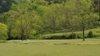 Greenbrier Farm Field