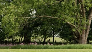 Greenbrier Farm Trees