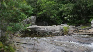 Ground-level View Of Mountain Stream And Forest, Blue Ridge Mountains