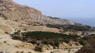 Group Of Trees In A Dry Valley