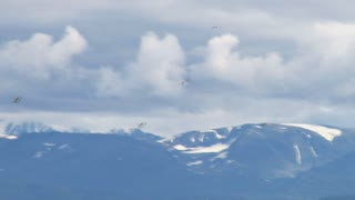 Gulls Fly by Cloudy Mountain Range